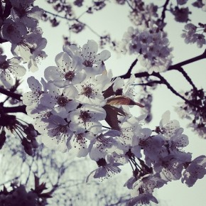 Instantané #15 (blossom)