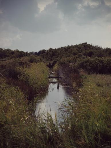 Marais du Douhet