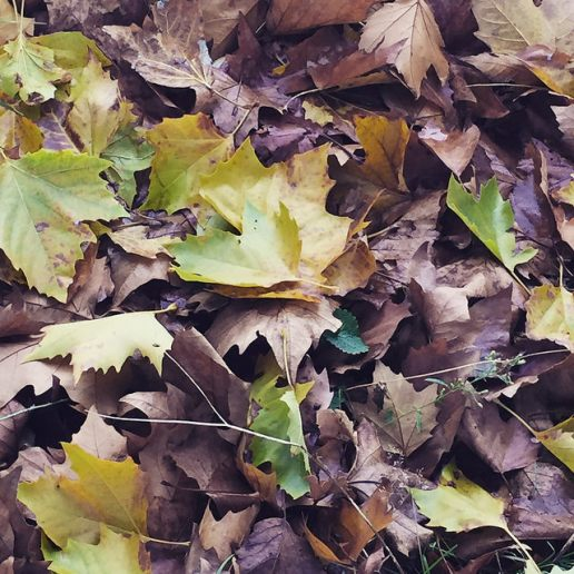 14. feuilles
