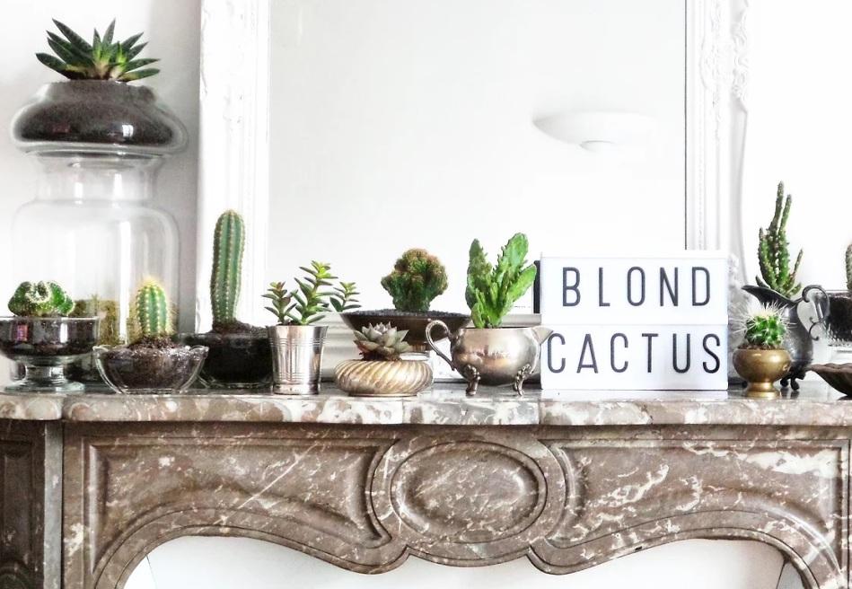 blond-cactus