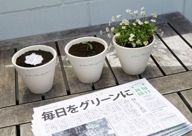 mainichi-journal-japonais-plante_6