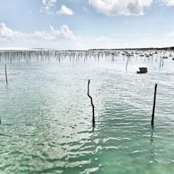 Bassin et parcs à huîtres