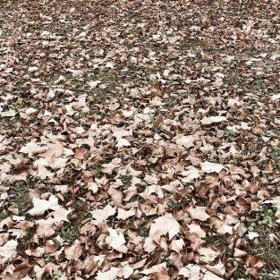Les feuilles mortes se ramassent à la pelle