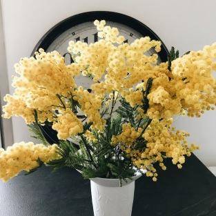 Quelques brins de mimosa