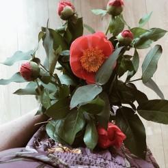 Un bouquet de pivoines