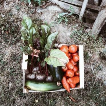 Les fruits et légumes du jardin