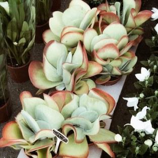 Acheter une drôle de petite plante