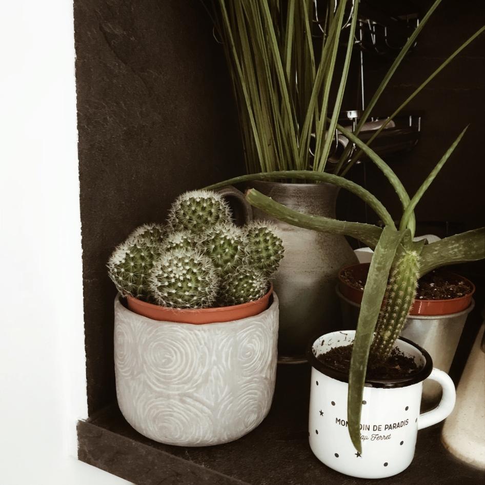 Cactus et Aloe vera