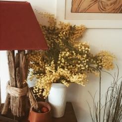 Un bouquet de mimosa