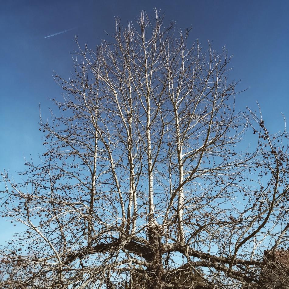 Instantané #67 (les arbres, l'hiver)