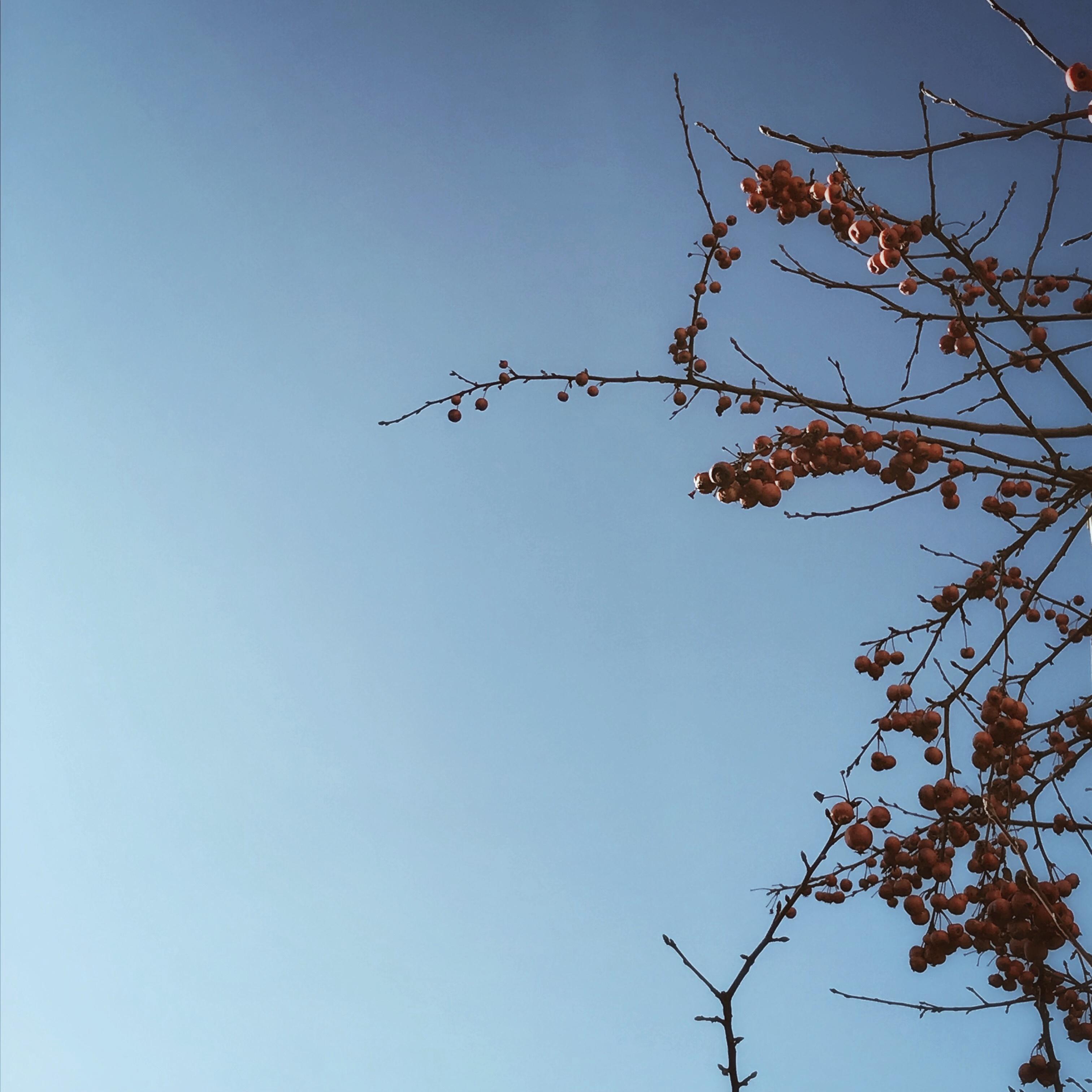 Le ciel d'un bleu si pur et la nature qui s'éveille