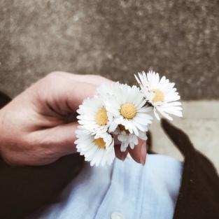 Fleurettes pâquerettes