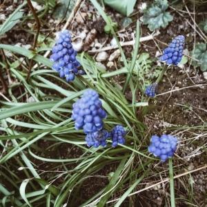 Fleurettes de printemps