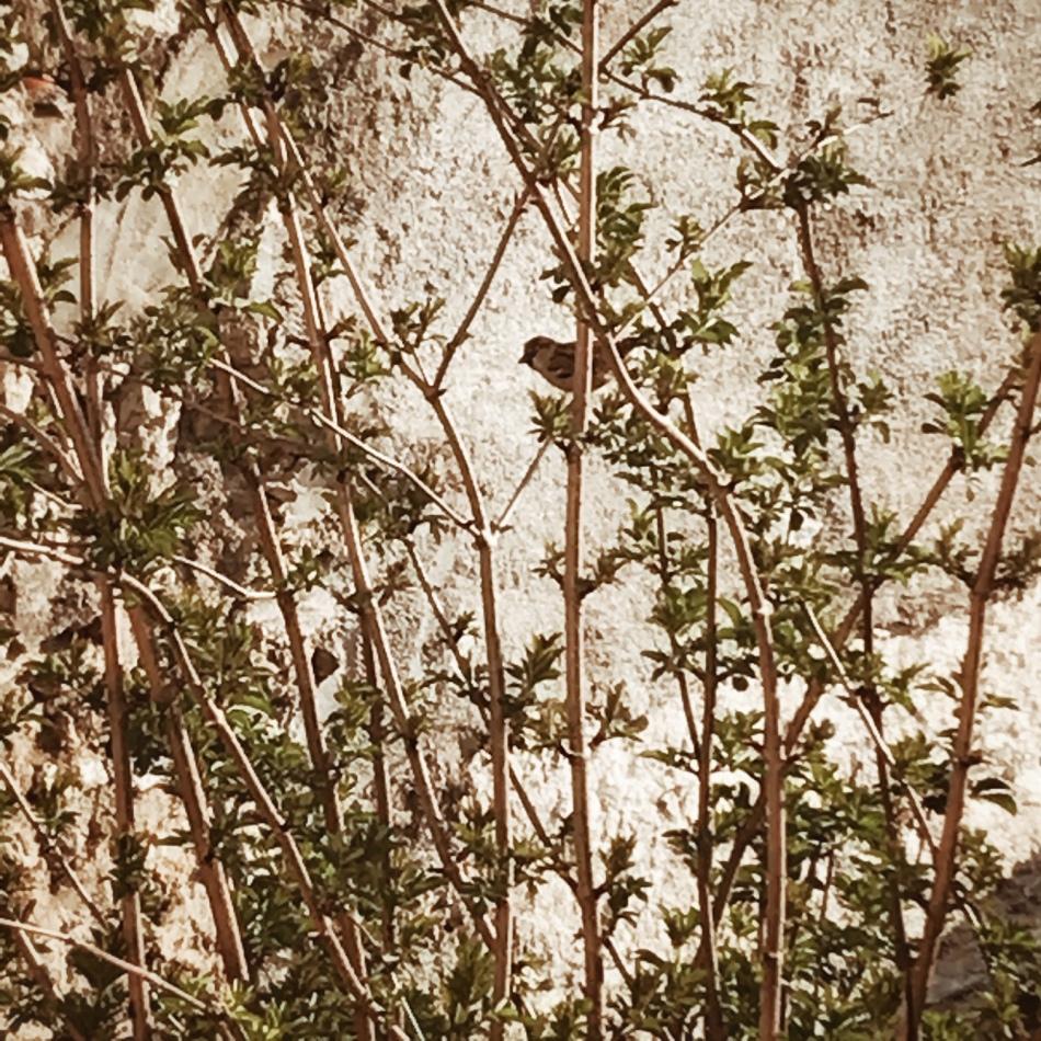 Instantané #73 (la fille qui parlait aux oiseaux)