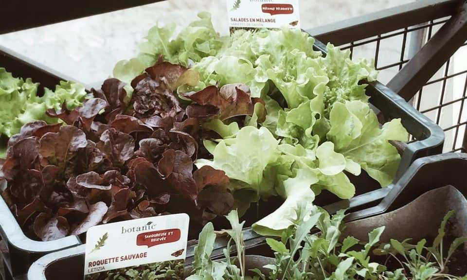 Instantané #78 (manger les légumes qu'on a cultivés)