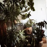 Rempoter les plantes