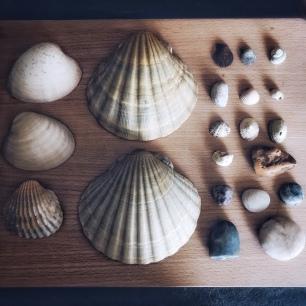 Souvenirs de mer...
