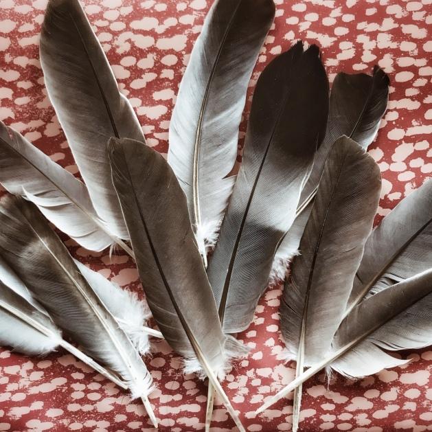 Le chemin des plumes