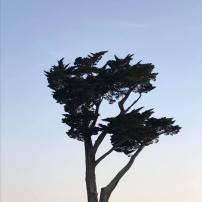 Cet arbre !