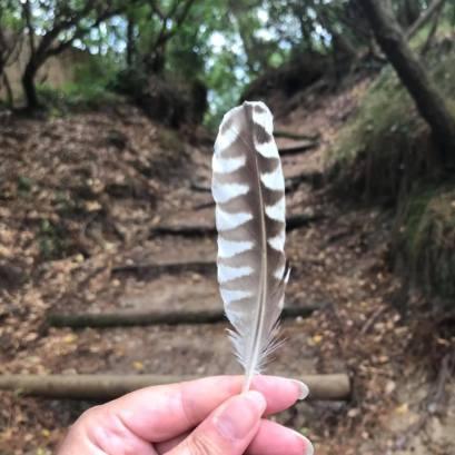 Une jolie plume