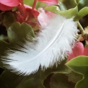 Délicate plume