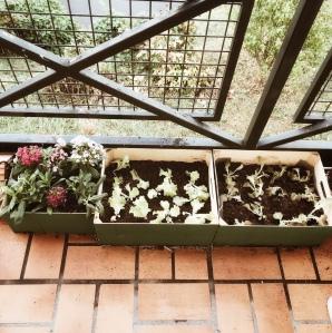 Plantations d'automne sur le balcon