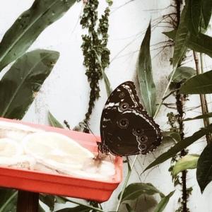 Au milieu des papillons