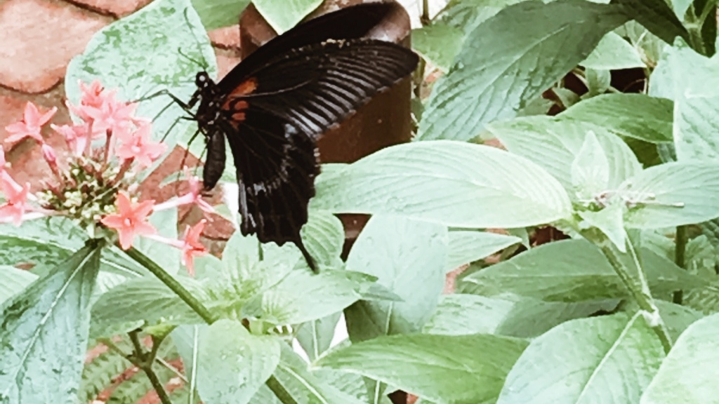 Comme un papillon