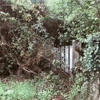 Le jardin de la Belle au Bois dormant