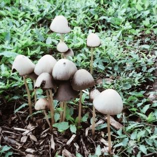Famille champignon