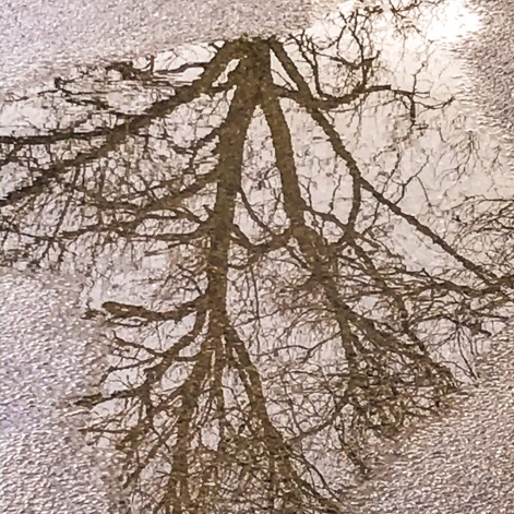 Reflet dans une flaque d'eau