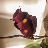 Petite fleur en papier