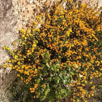 arbre à pompons jaunes