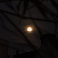 Pleine Lune (supposément rose)