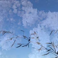 Nuages lilas