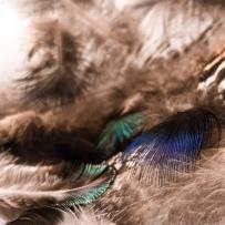 Le vêtement léger des oiseaux