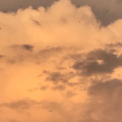 Le ballet des oiseaux dans l'or du soir qui tombe