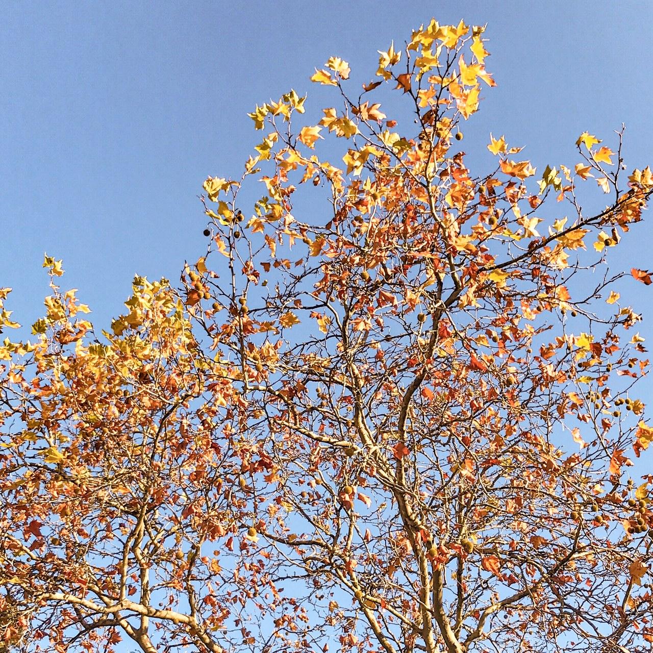 Les dernières feuilles mortes