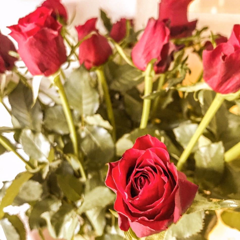 Voici les roses